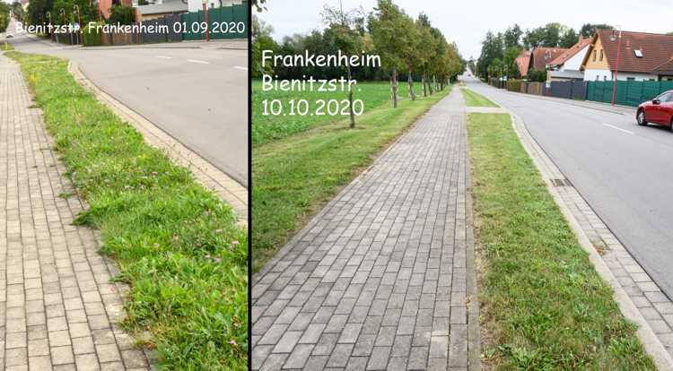 Frankenheim, Bienitzstraße: Am 1. September (links) versuchten die verkümmerten Reste kastrierter Kräuter ein letztes Mal, ihre blühenden Häupter über den millimeterhohen Grashorizont zu erheben. Schon am 10. Oktober war das lebensunwerte Kraut schon wieder enthauptet.