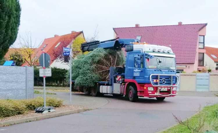 Der Markranstädter Christbaum auf dem Weg vom Anger in die Karlstraße.