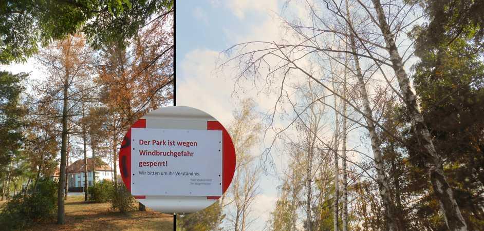 Im August letzten Jahres mussten bereits vertrocknete Bäume gefällt werden.