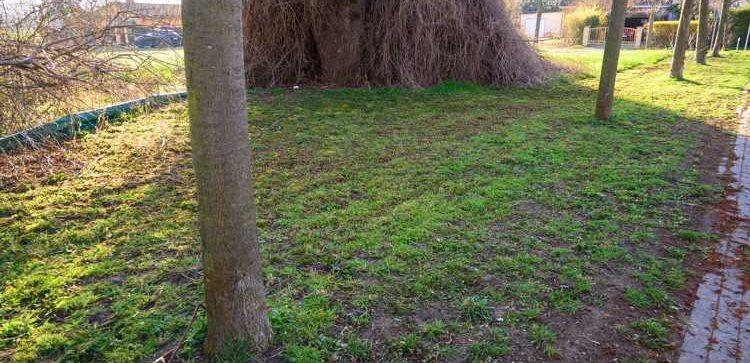 Noch bevor es hier für Insekten was zu entdecken gab, wurde die Wiese am Frankenheimer Hopfenteich entblüht.