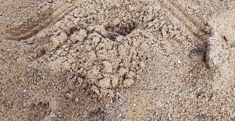 Die Spuren verraten: Katzen sind fies. Sie kacken in den Sand und schieben es auf die Hunde.