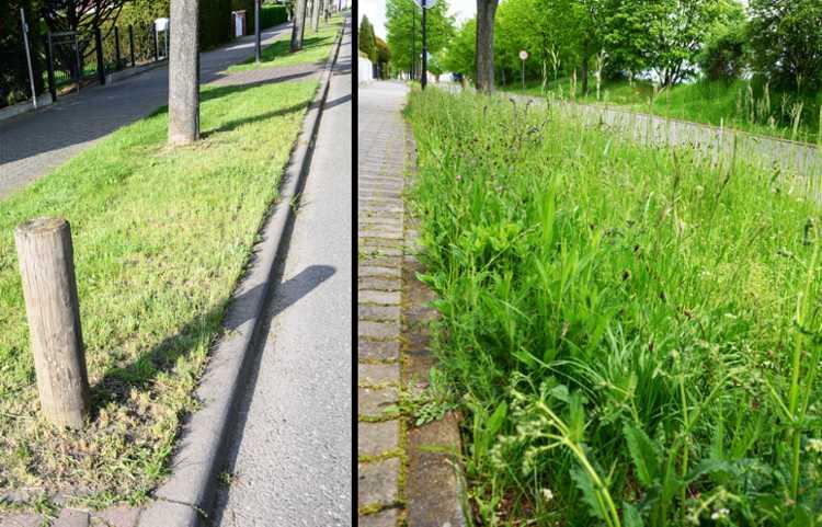 Eine Straße - zwei Ansichten. Rechts der Zustand am 17. Mai kurz vor der Blüte, links zwei Tage später nach dem Mäheinsatz.